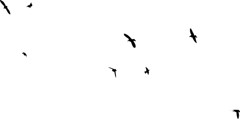 Birds 4 Vector