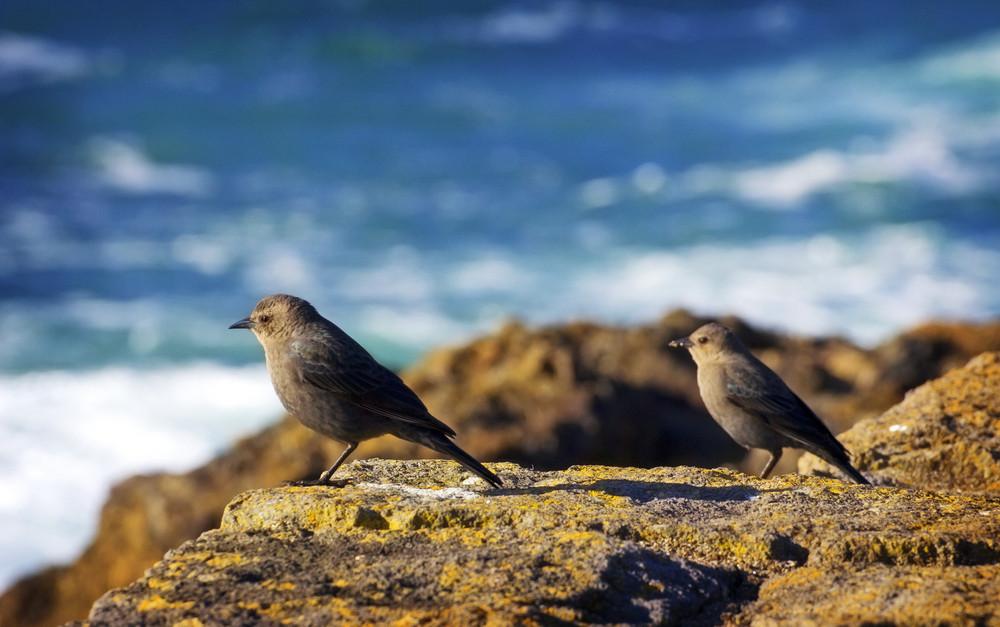 Birds On Coast