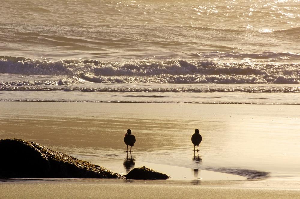 Birds On Sea Beach 140