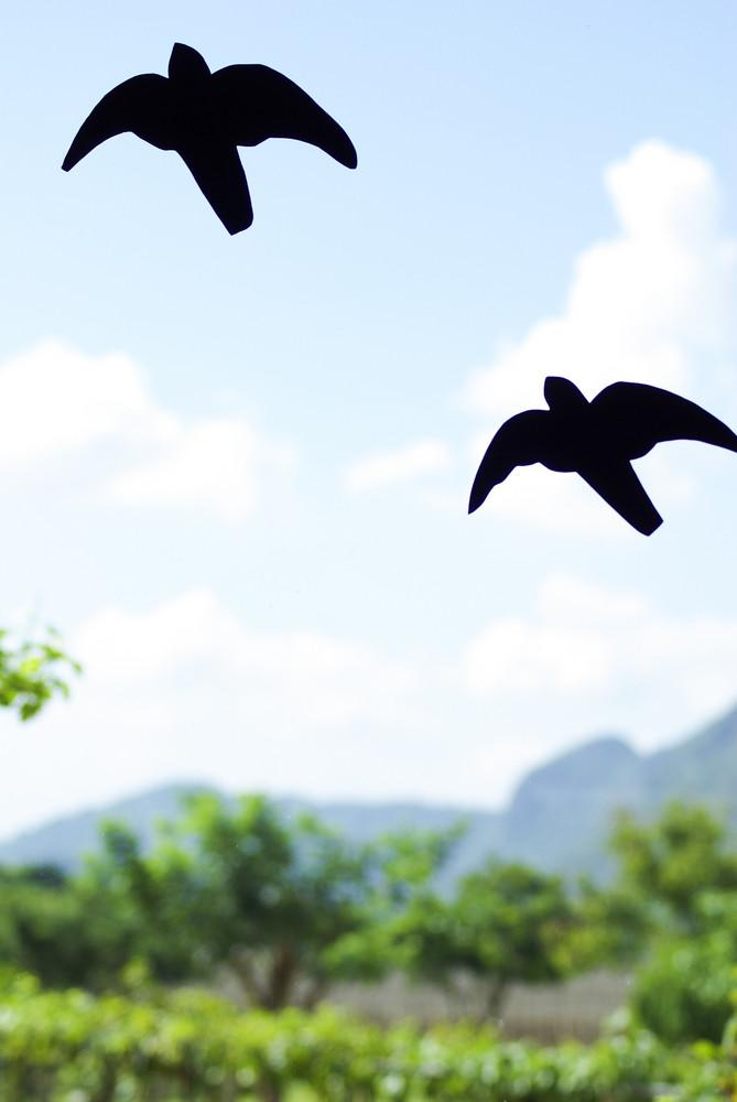 Birds Silhouettes on sky