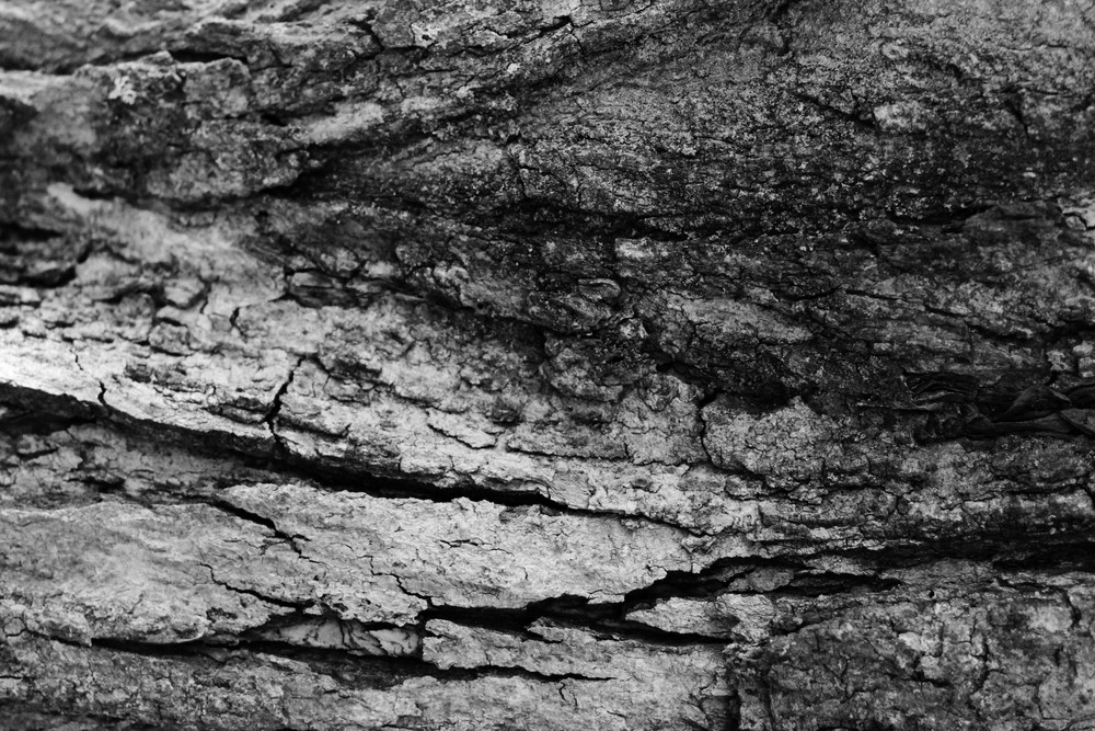 Black And White Bark 2 Texture