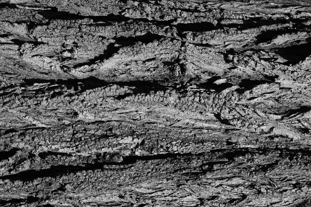 Black And White Bark 4 Texture