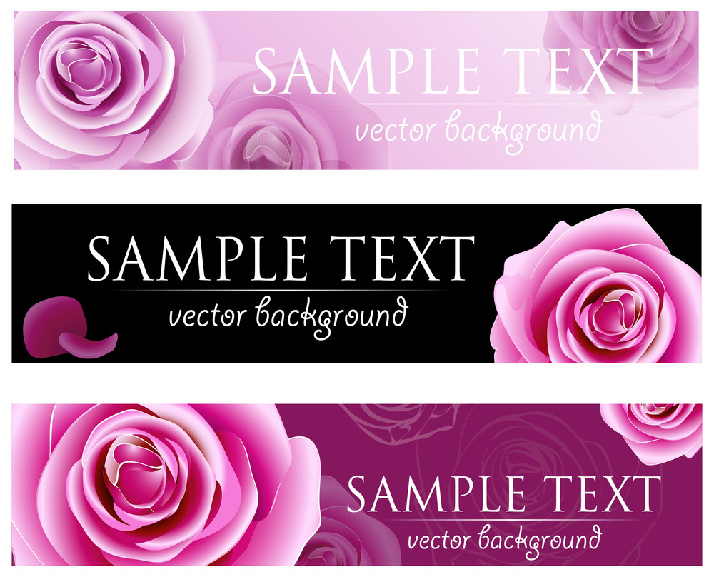Blossom Roses Vector Background.