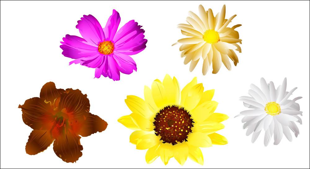Blossoms Vectors
