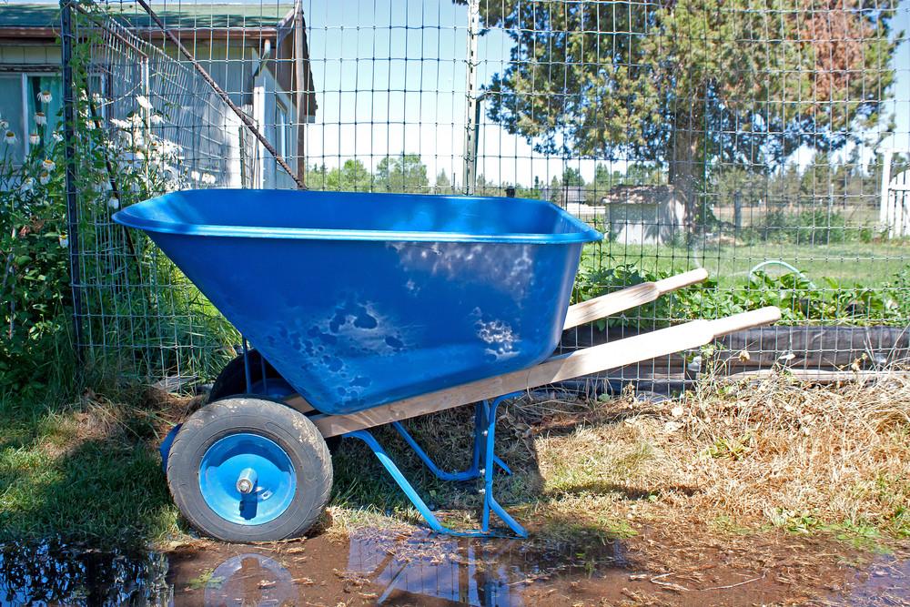 Blue Wheel Barrow In Garden