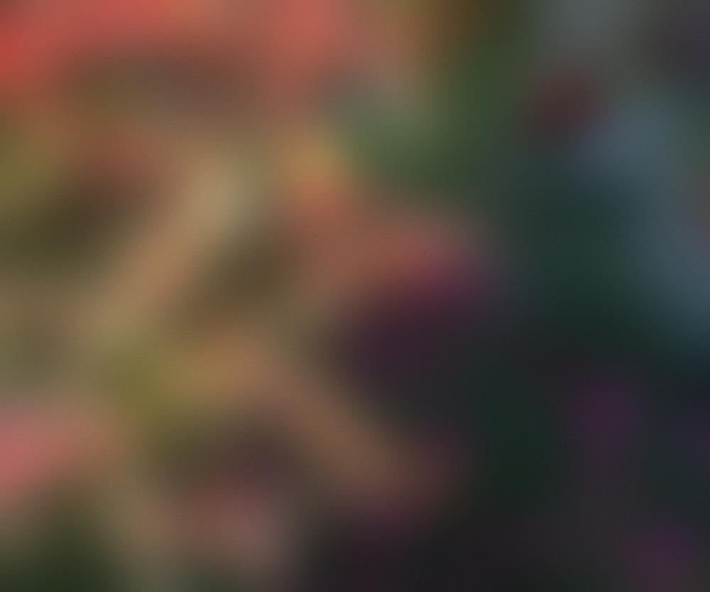 Blurred Image Background