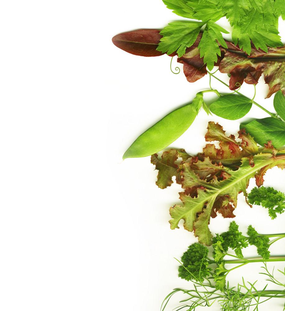 Border Of Freshpicked Herbs