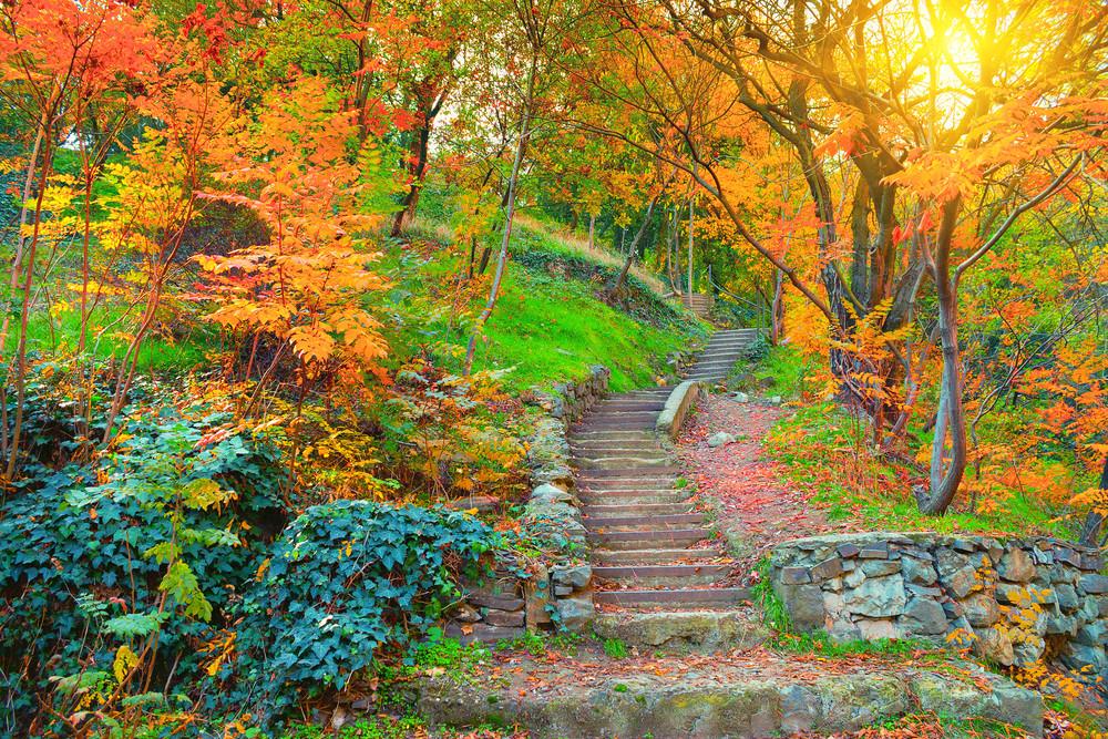 Botanical garden in Tbilisi