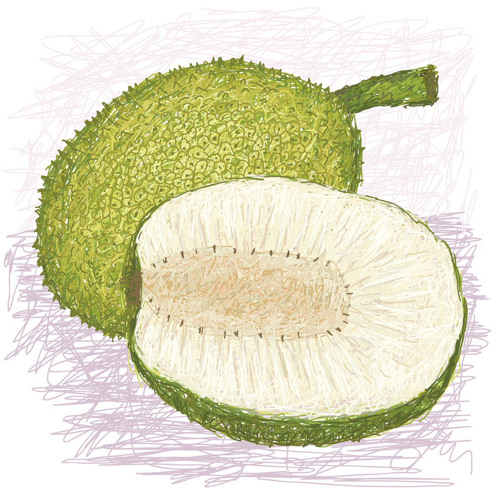 Breadfruit Rough-skinned Variety Whole And Half