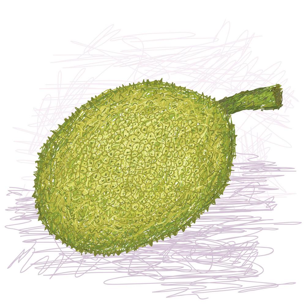 Breadfruit Rough-skinned Variety Whole