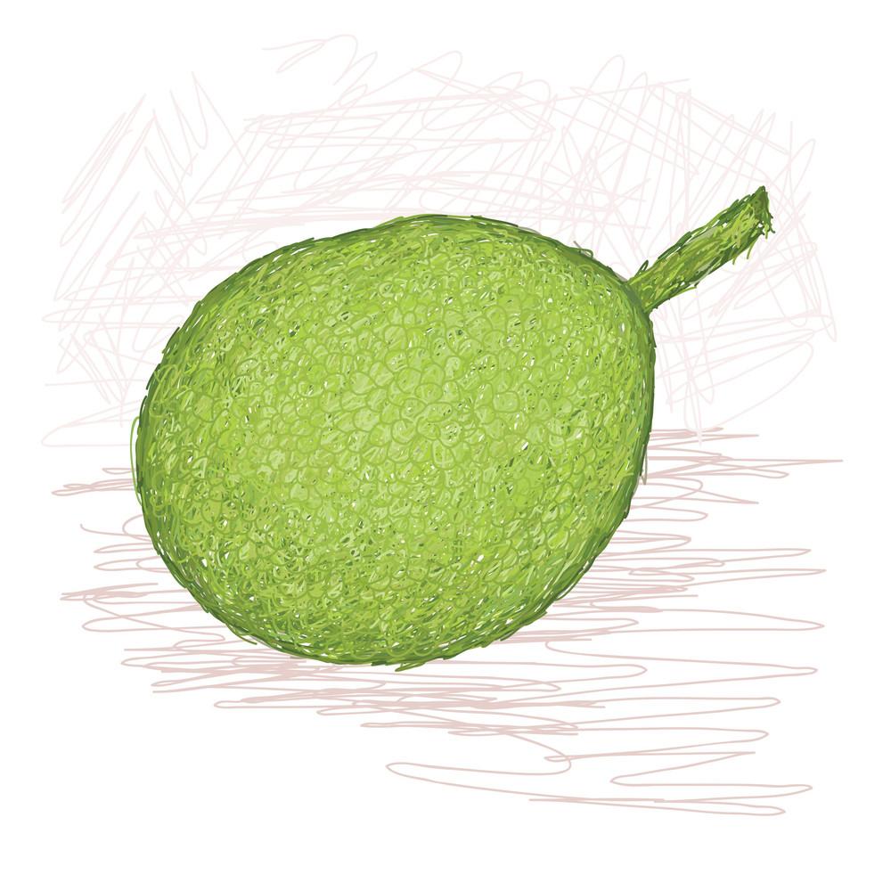 Breadfruit Smooth-skinned Variety