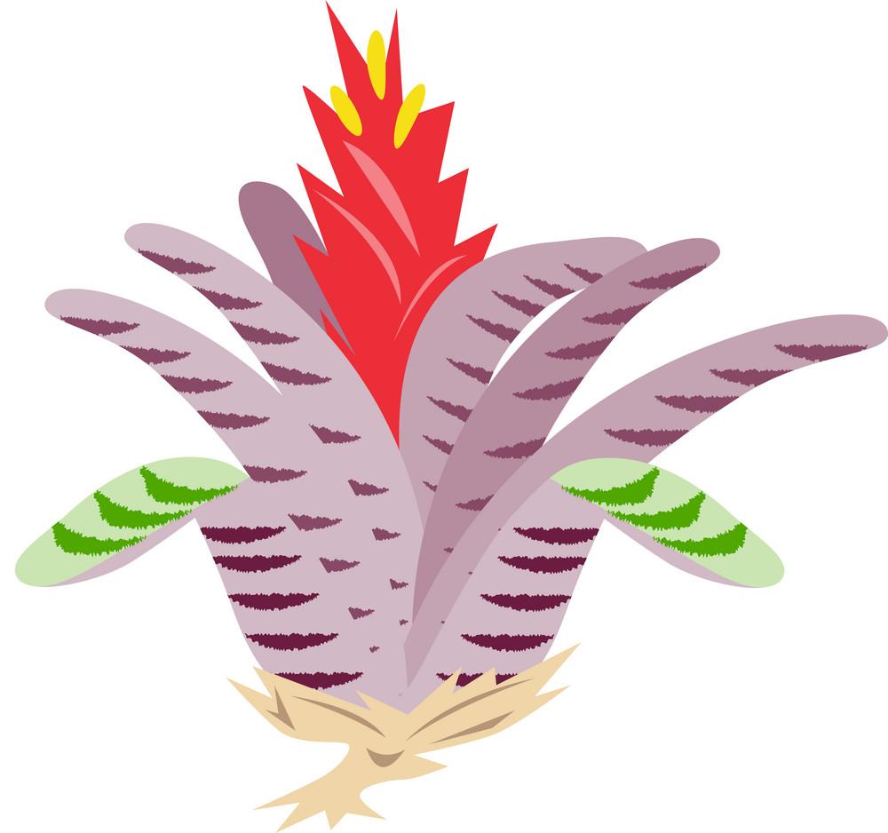 Bromeliad Flower Retro