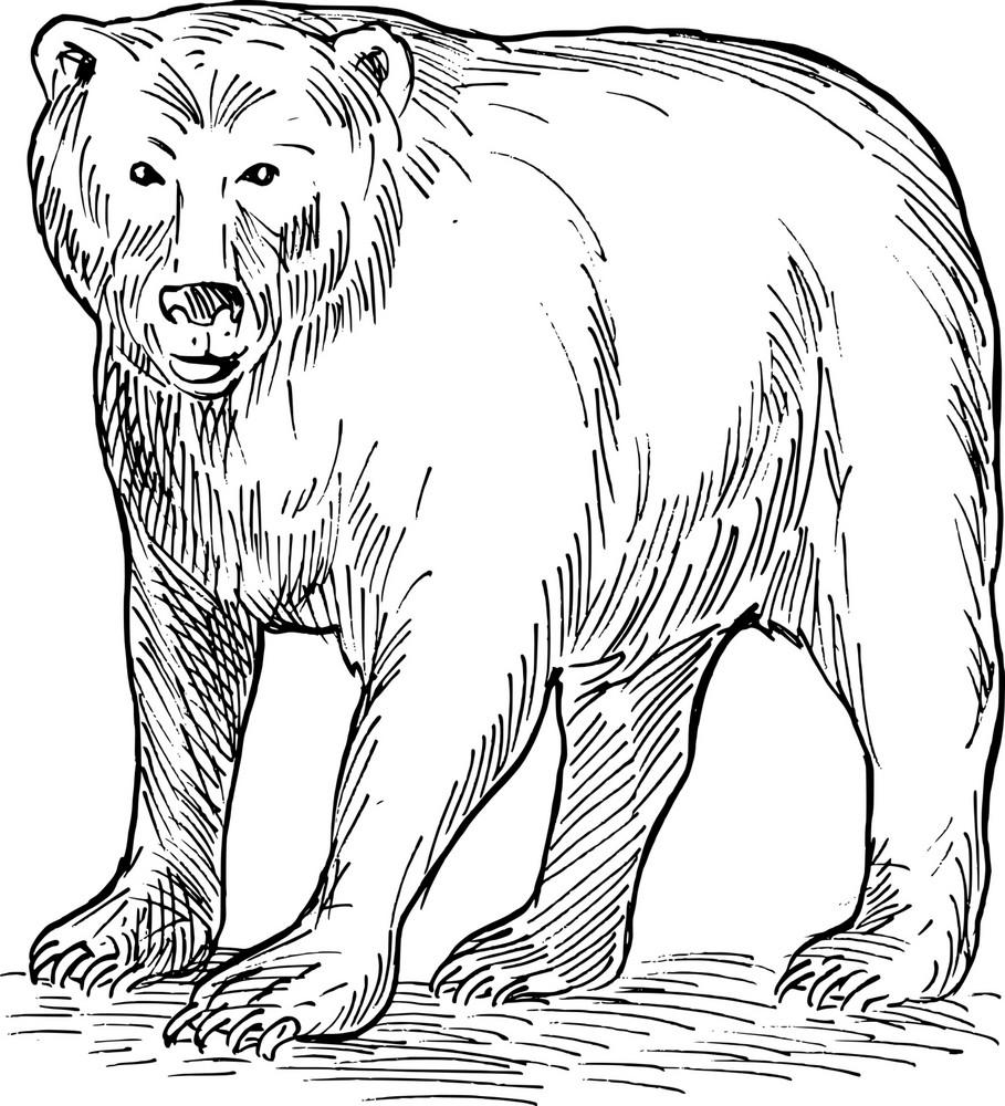 Brown Bear Drawing