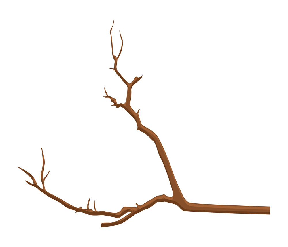 Brown Branch