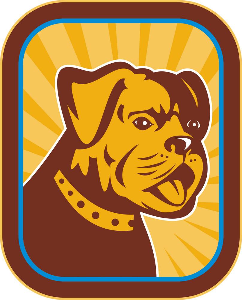 Bulldog And Boston Terrier Hybrid
