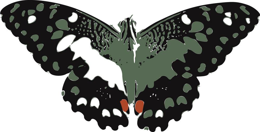 Butterflies 5 Vector