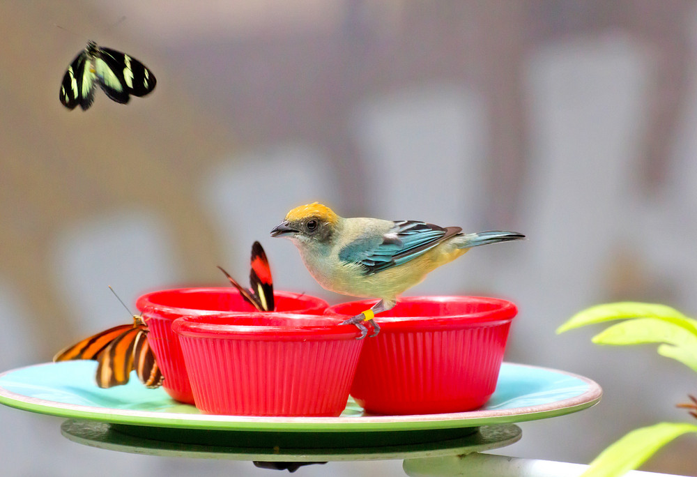 Butterflies And Bird