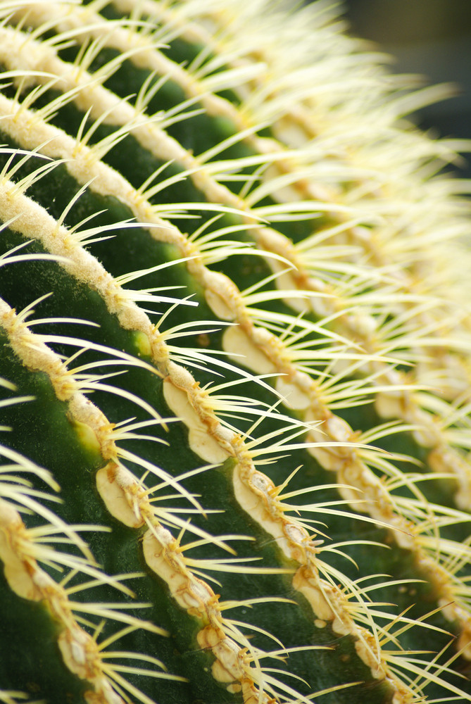 Cactus close up with blurry background