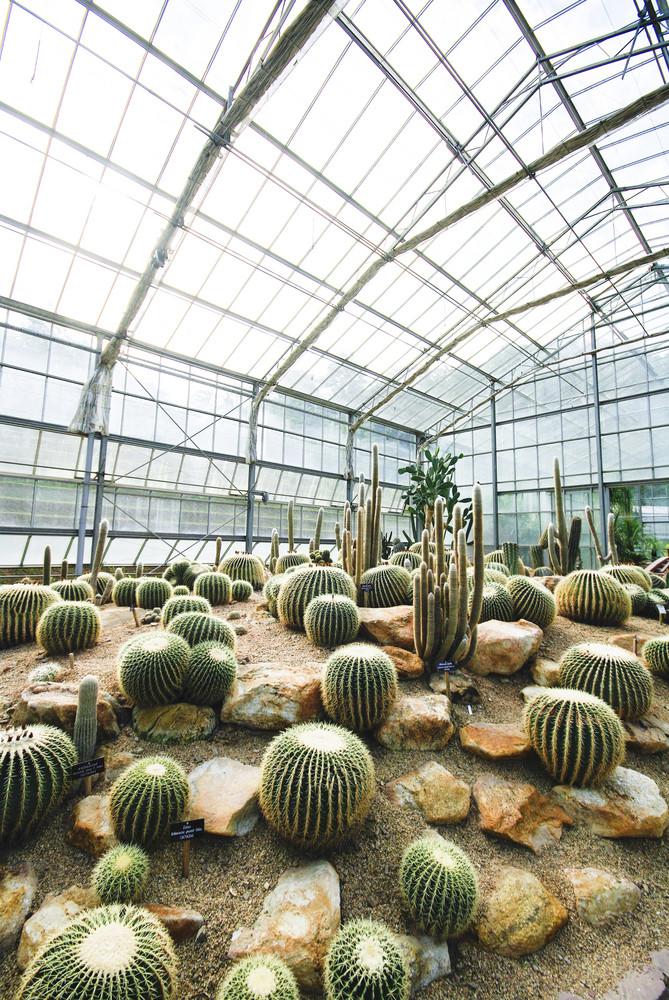 Cactus live in Desert