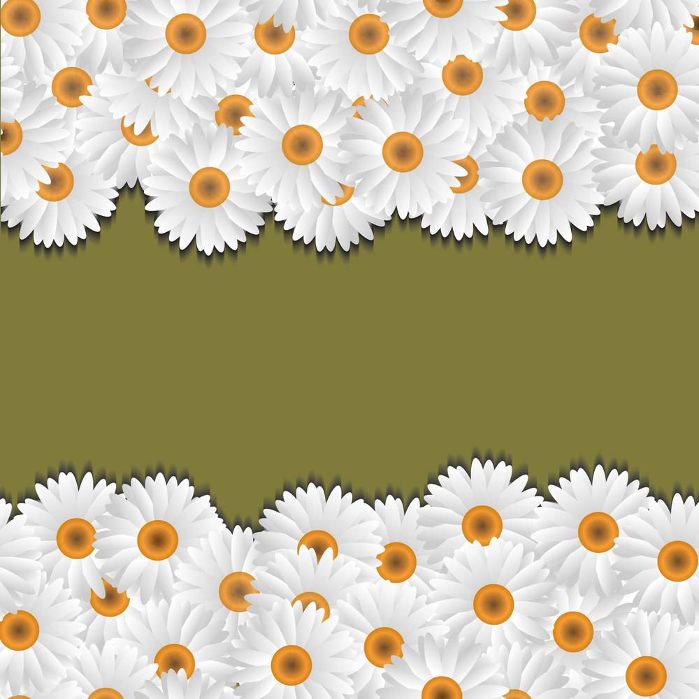 Camomile Floral Borders