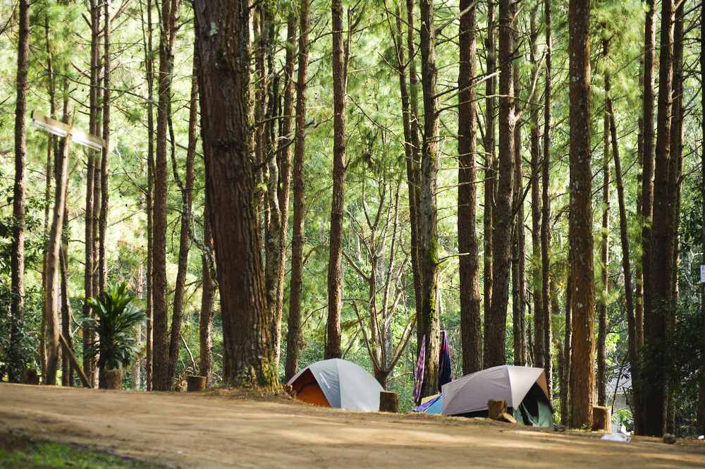 Camping tent in forest of Thailand