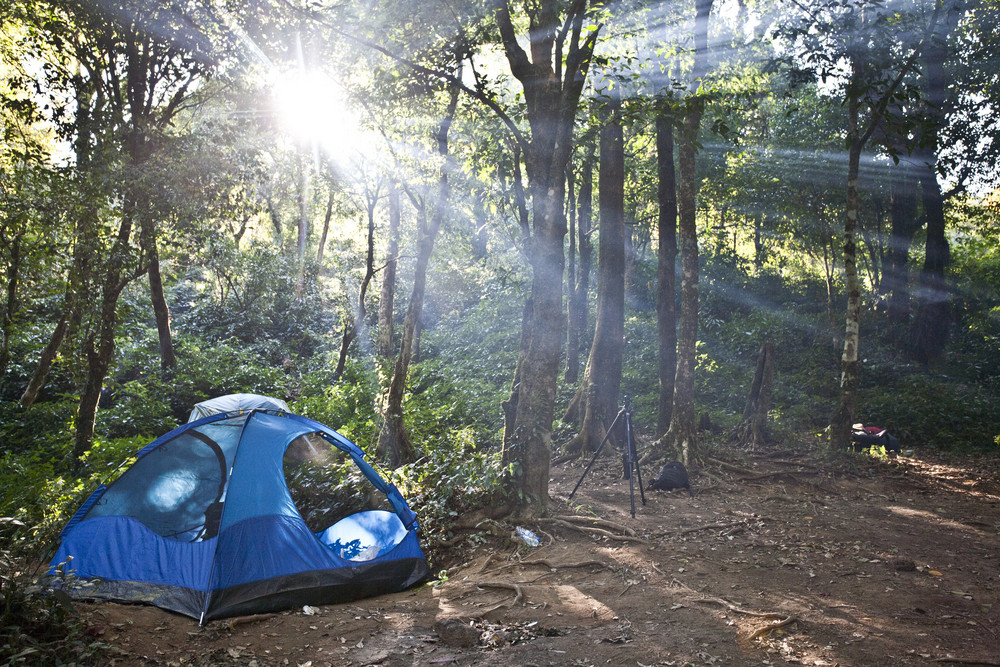 Camping tents in forest