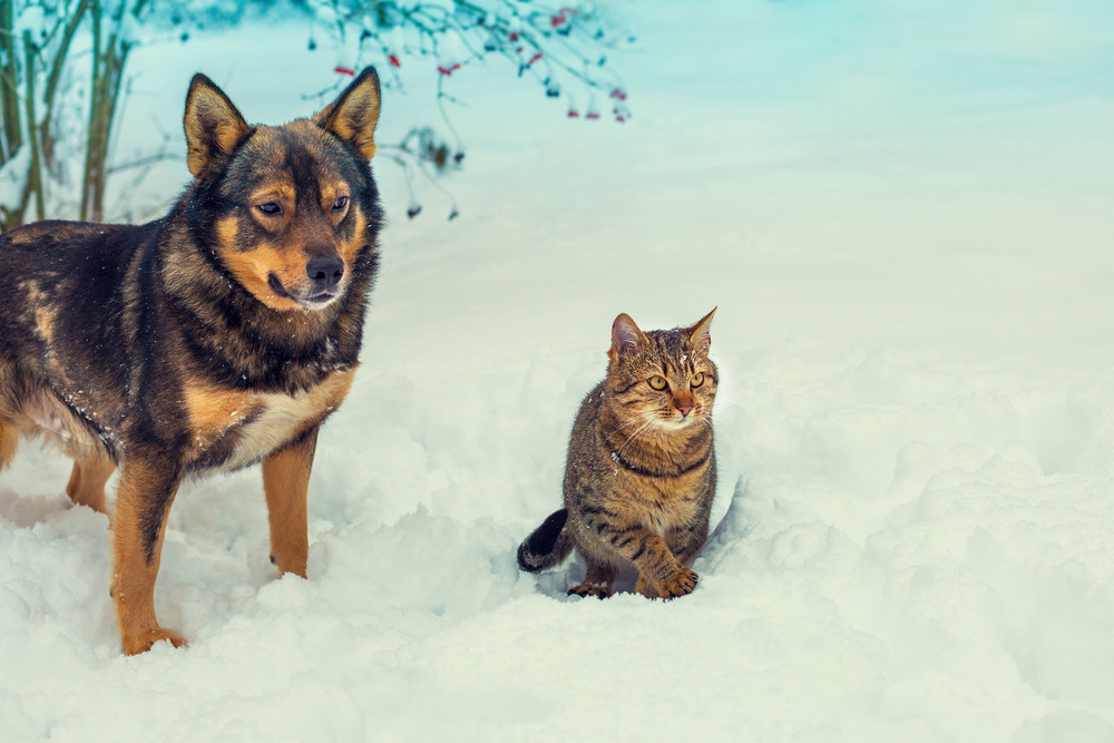 Cat and dog walking together in snowy winter