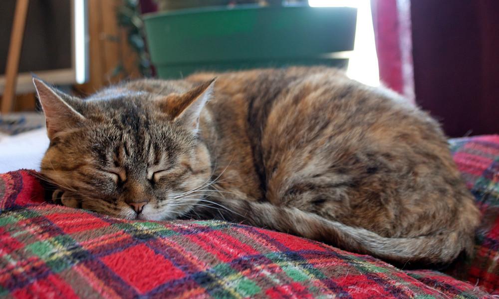 Cat Sleeping On Blanket