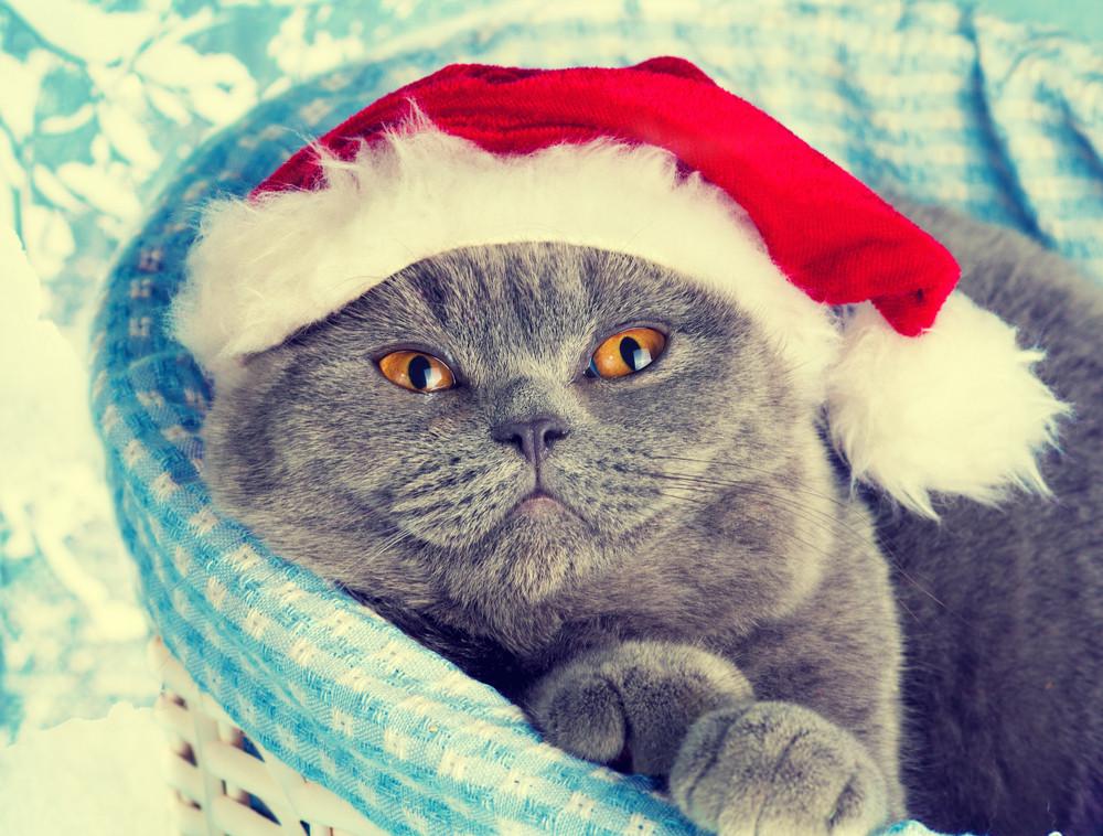 Cat wearing Santa hat dreaming in a basket