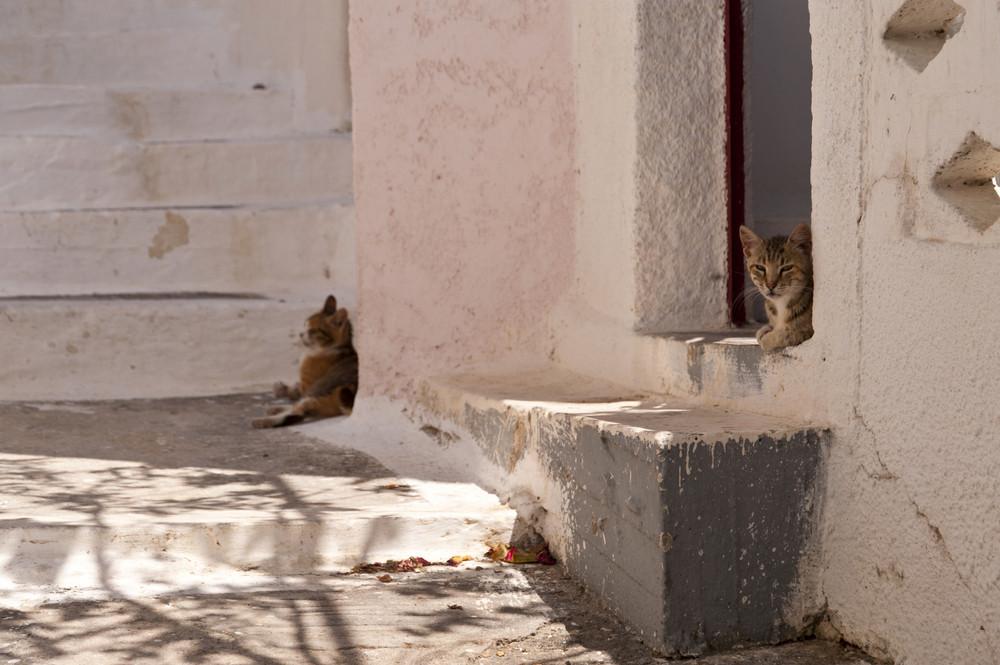 Cats On Samos