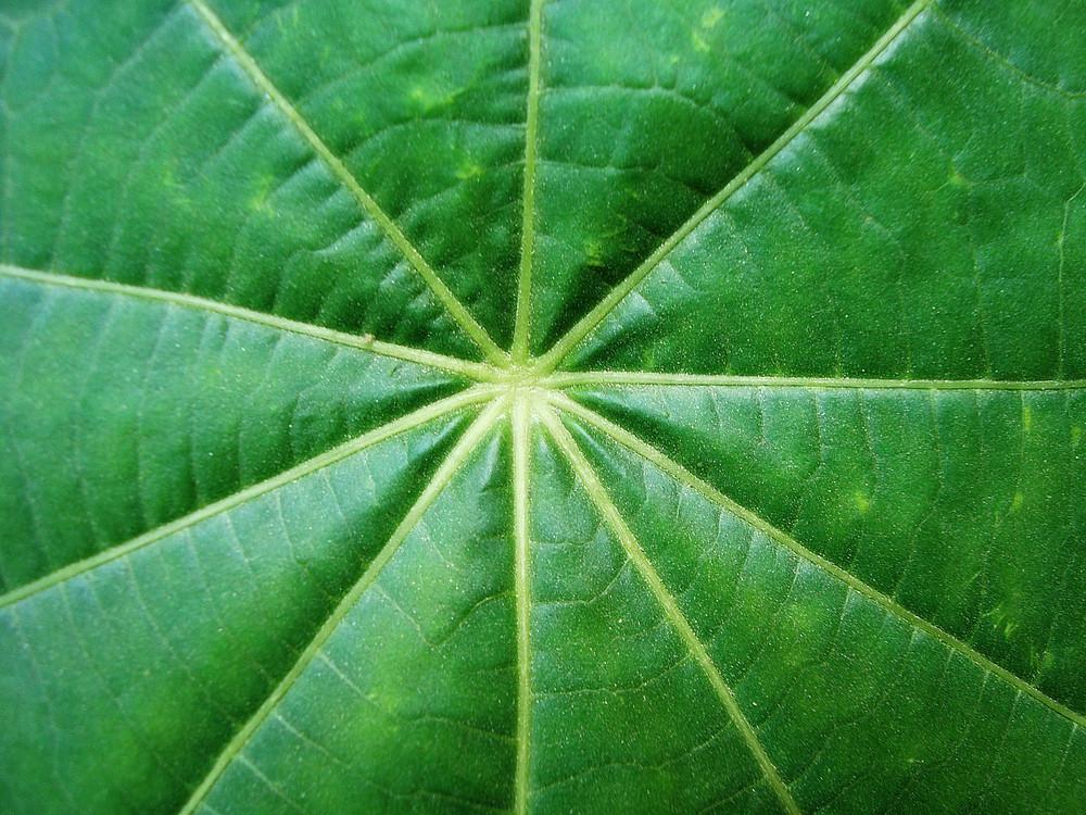 Center_close_up_leaf_texture