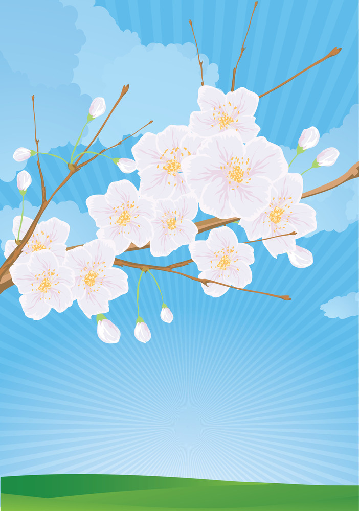 Cherry Flower. Seamless Vector Background.