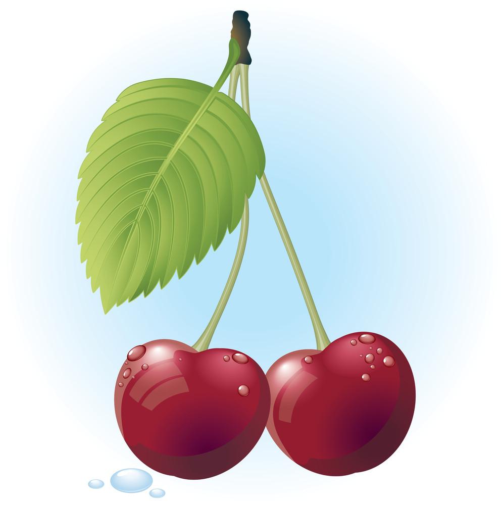 Cherry. Vector.
