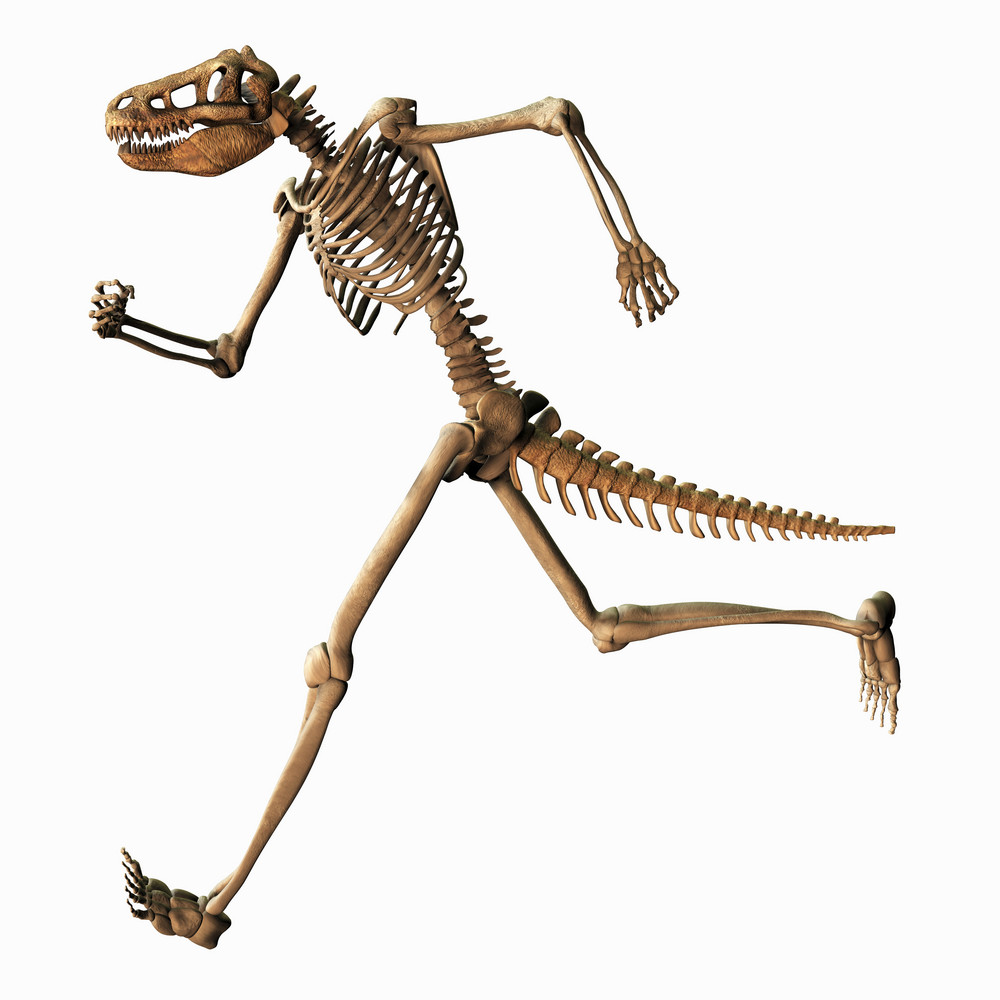 Chimeric Skeleton