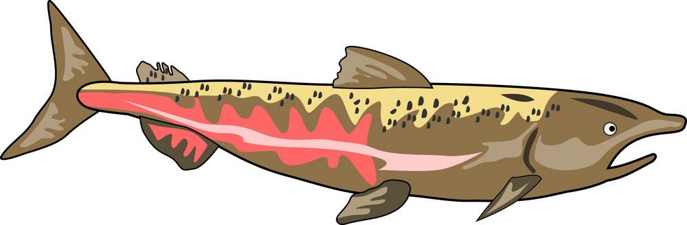 Chinook Salmon Fish Retro