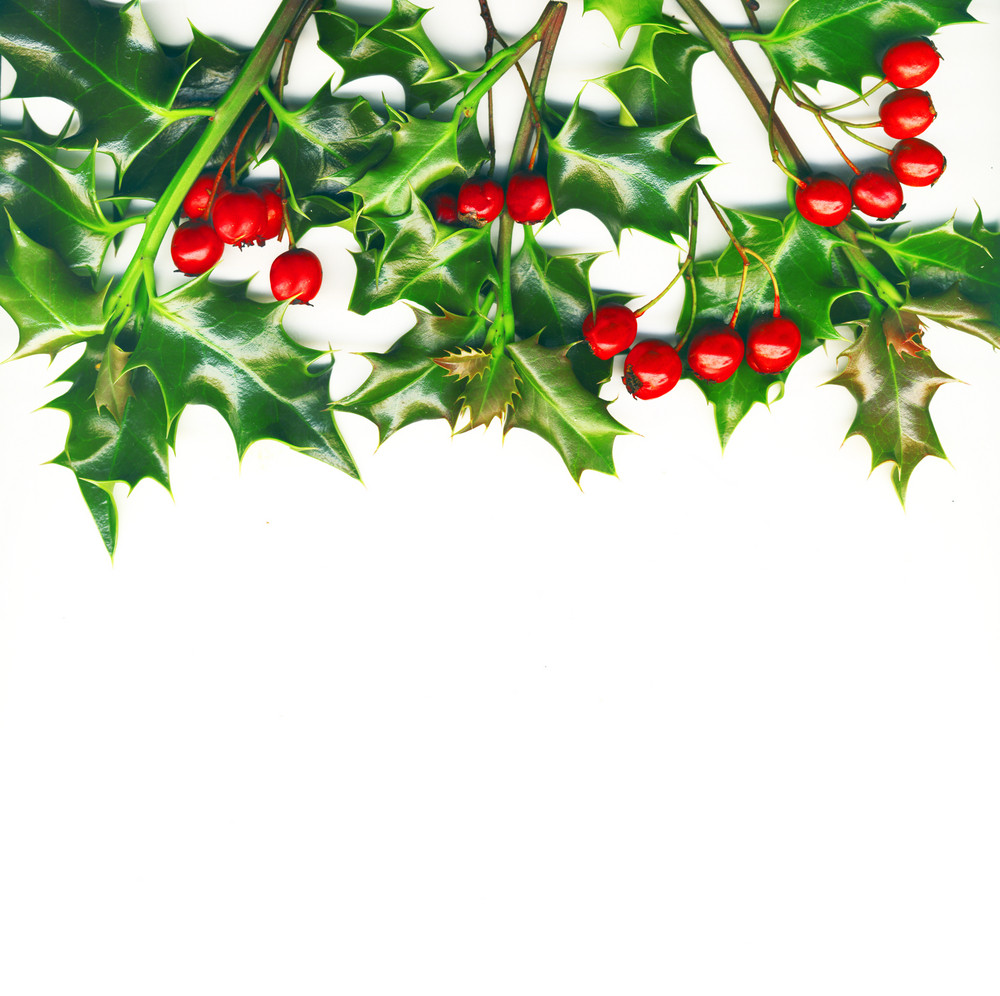 Christmas Border Made Of Holly With Red Berrys