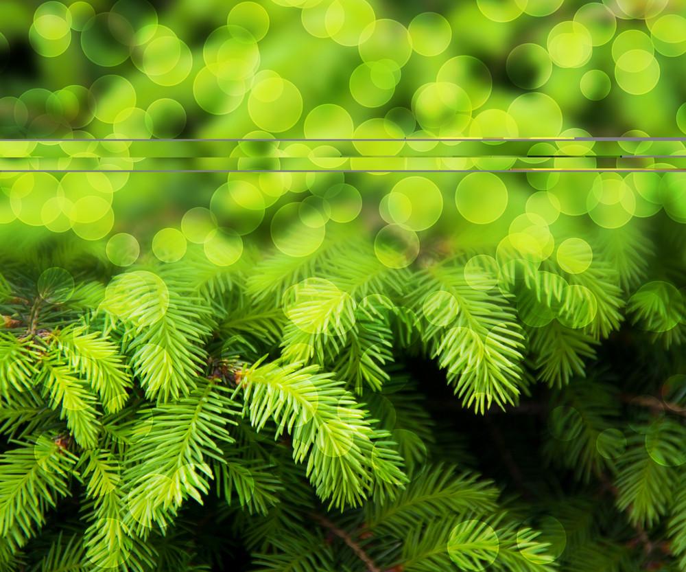 Christmas Fir Green Abstract Background