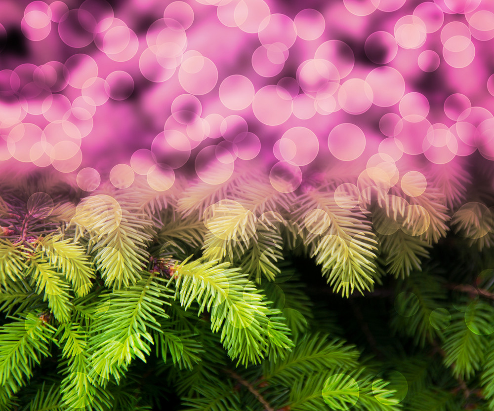 Christmas Fir Pink Abstract Background