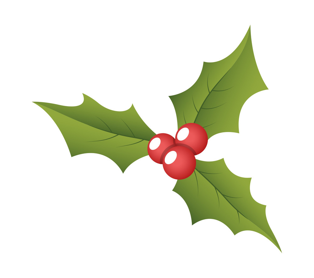 Christmas Holy Leaves Vector