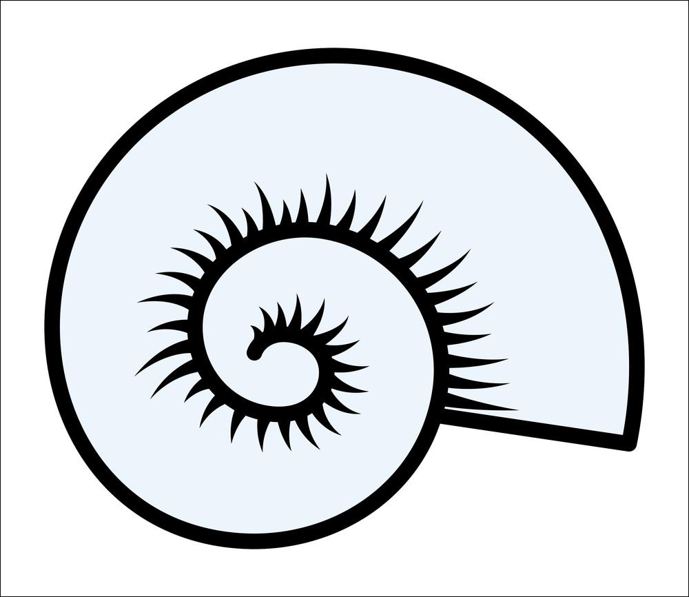 Circular Seashell - Vector Illustration