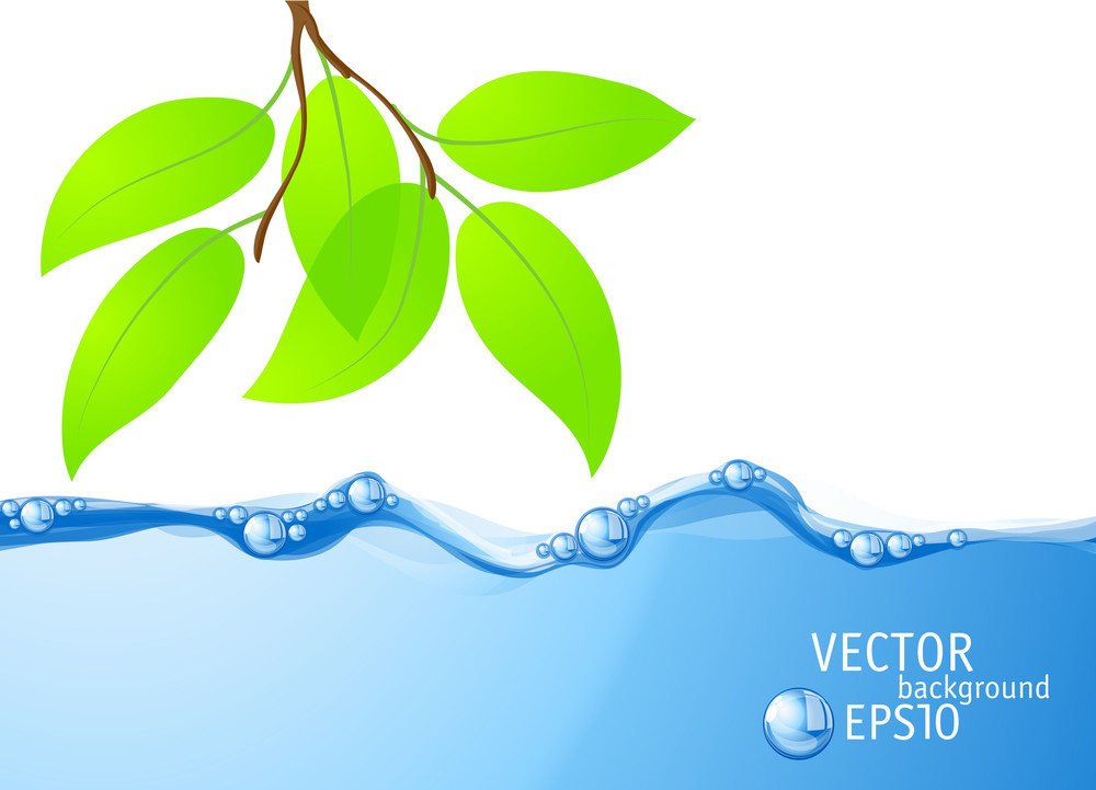 Clear Blue Water Flow And Fresh Green Leaves. Vector.