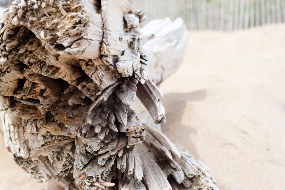 Close up macro detail of a  large log of drift wood laying in the sand on the beach with copy space.