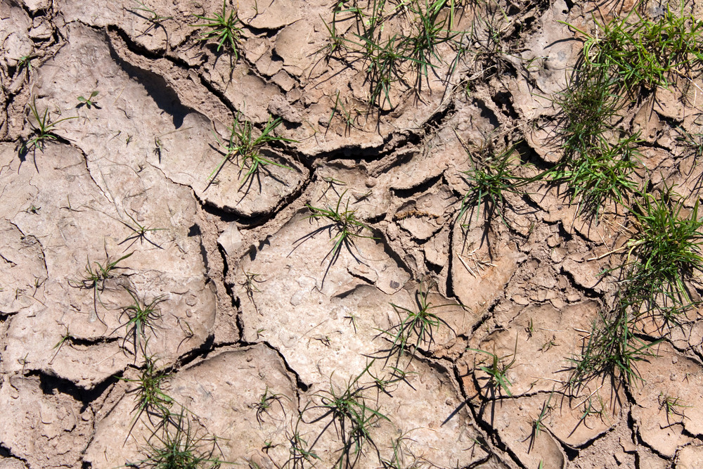 Close up view of the dry cracked earth dirt and clay during a dry period.