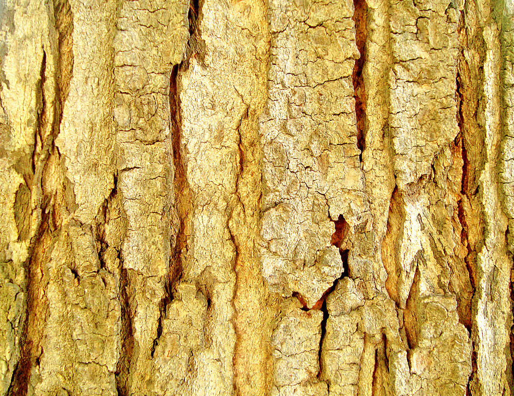 Close_up_tree_bark_texture