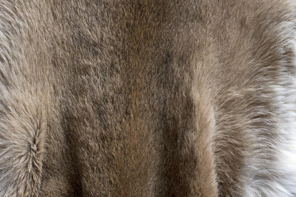 Cloths Texture 66