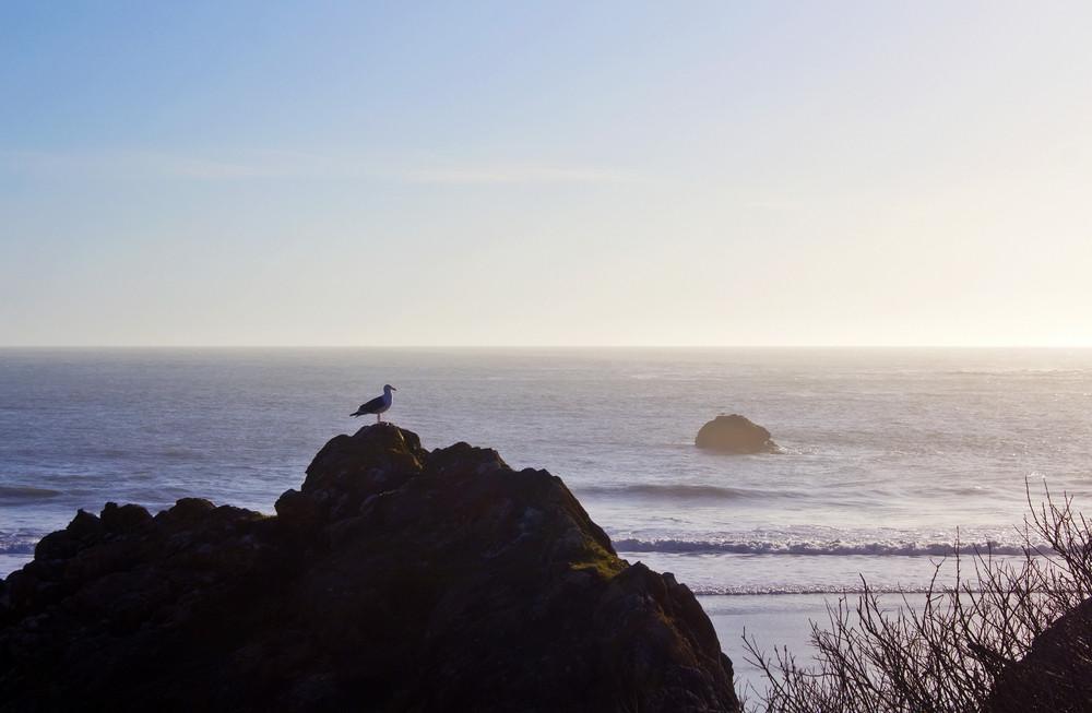 Coast Background