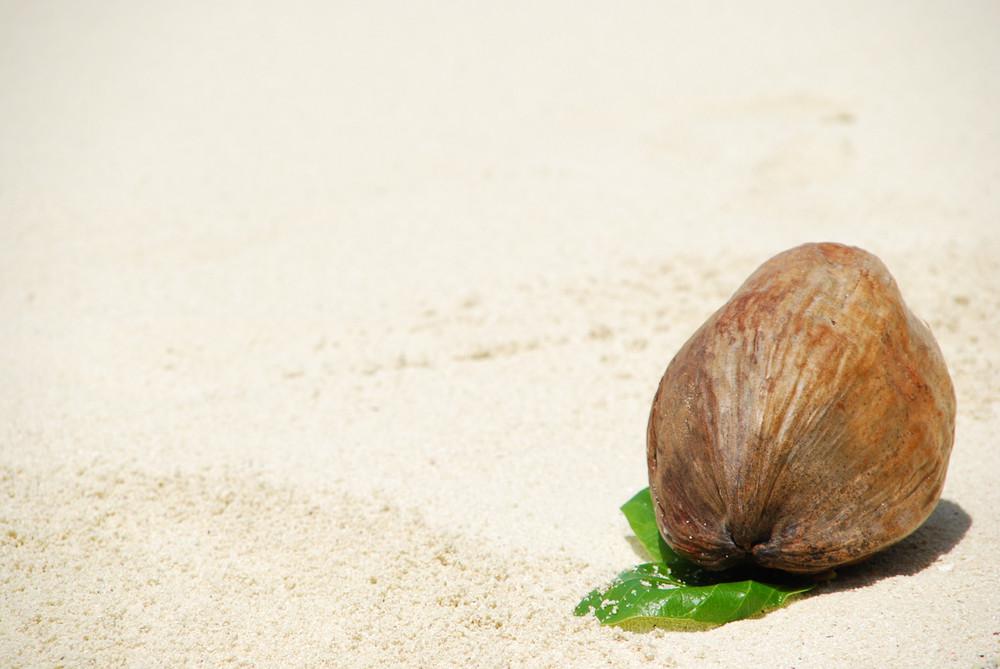 Coconut Fruit On A Tropical Sandy Beach