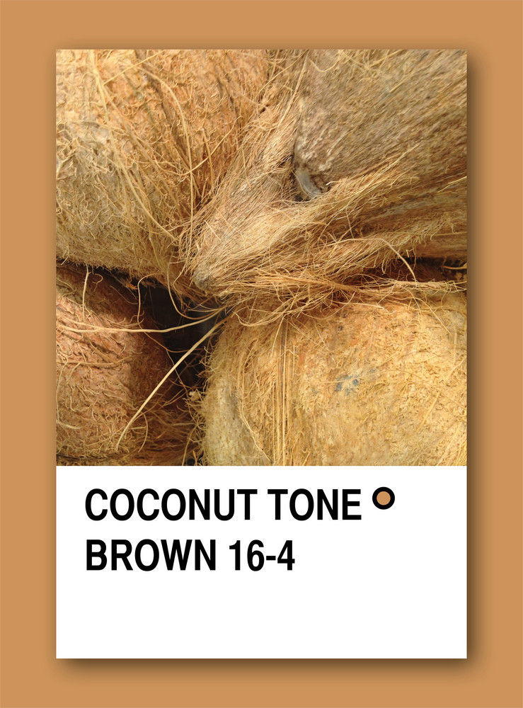 Coconut Tone Brown. Color Sample Design