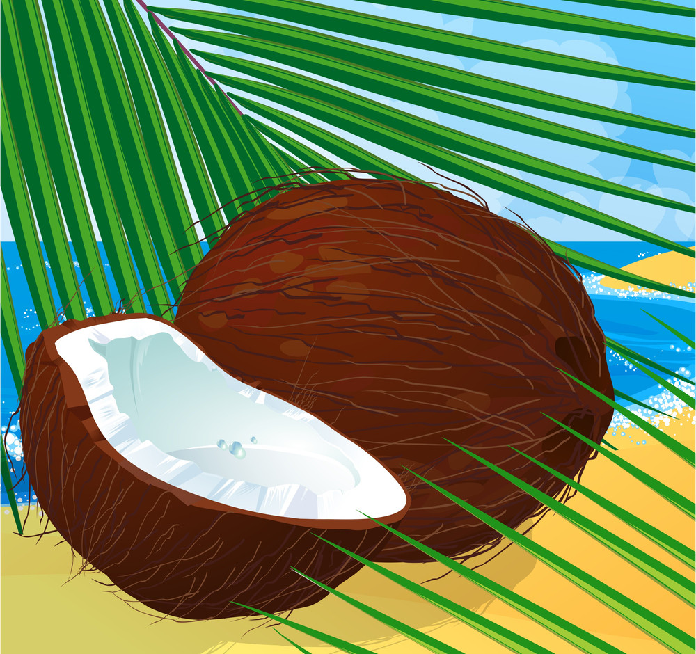 Coconut. Vector.