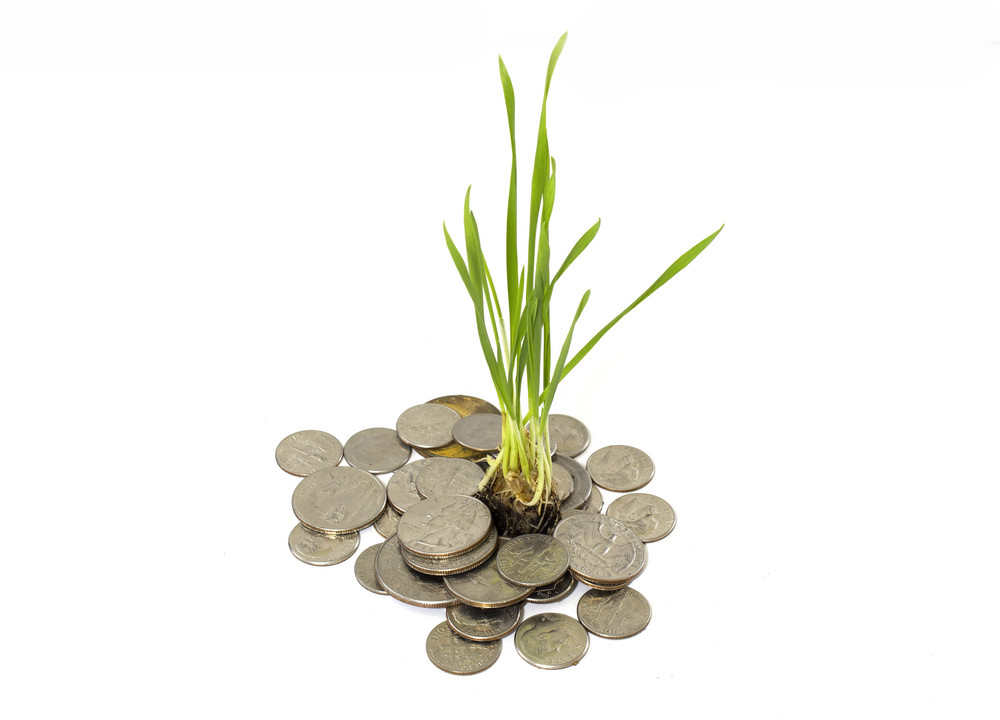 Coins In Plant